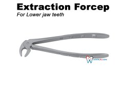 Extraction Forceps Extraction Forceps Adult